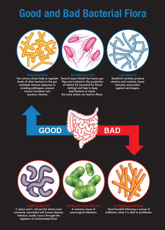 bacteria good or bad Bacteria – good guy or bad guy you have reached the end of the webquest repeat after me: i am so good i can hardly stand it i am a microorganisms monster.